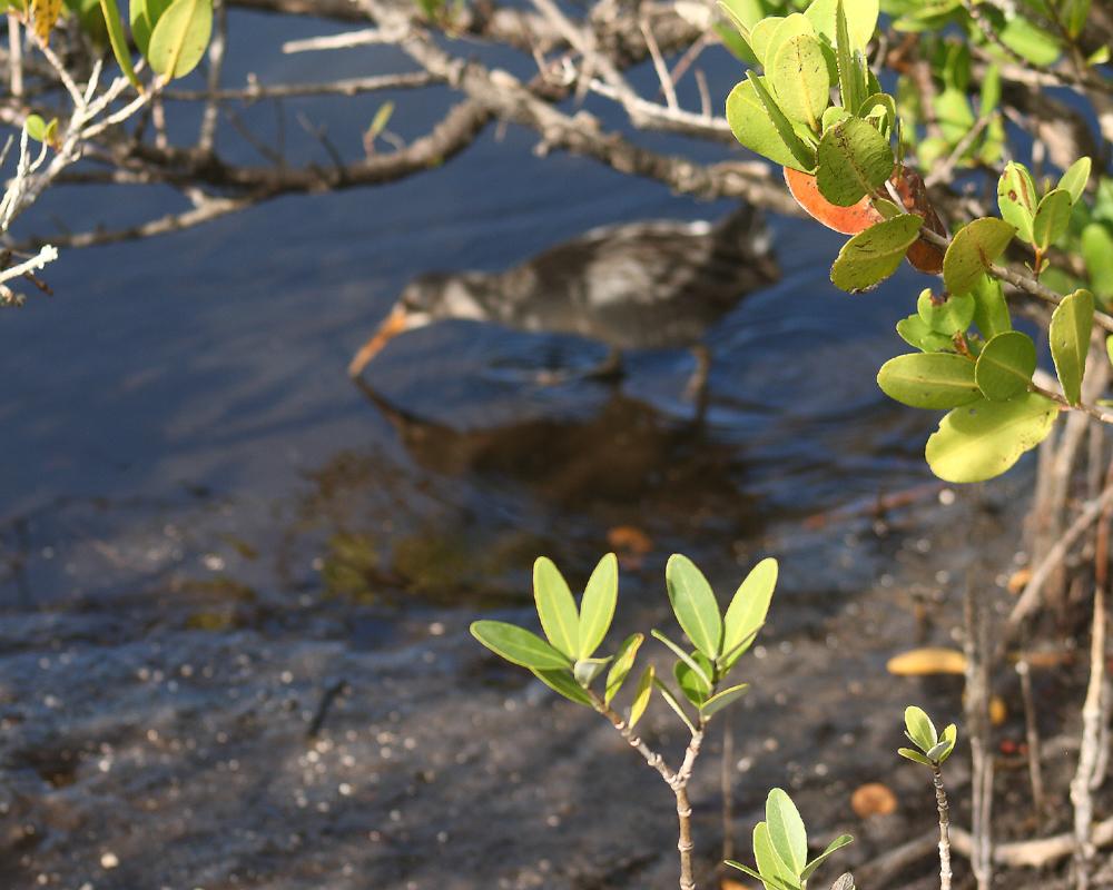 download Invasive Species: